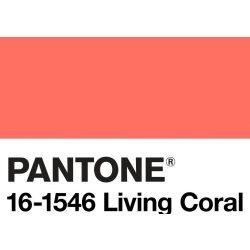 Catania 2019 - living coral